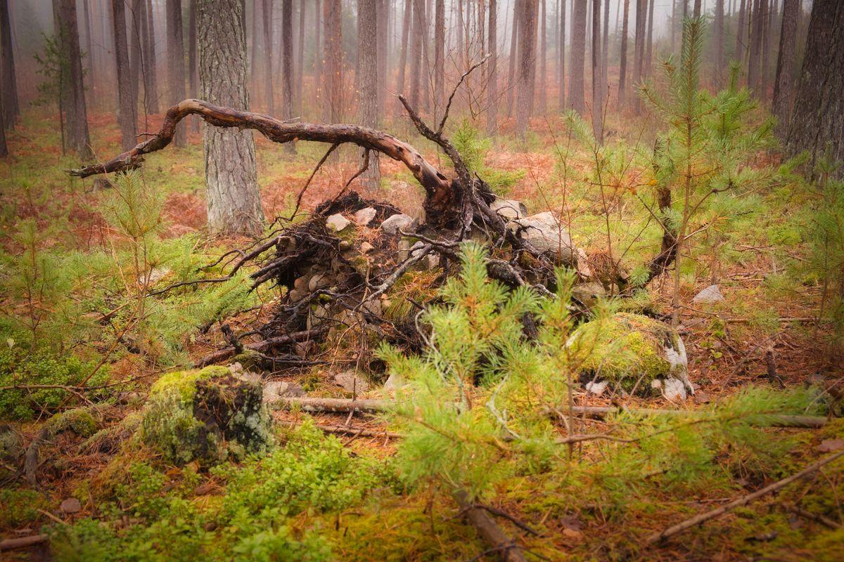 Misty woodland 10