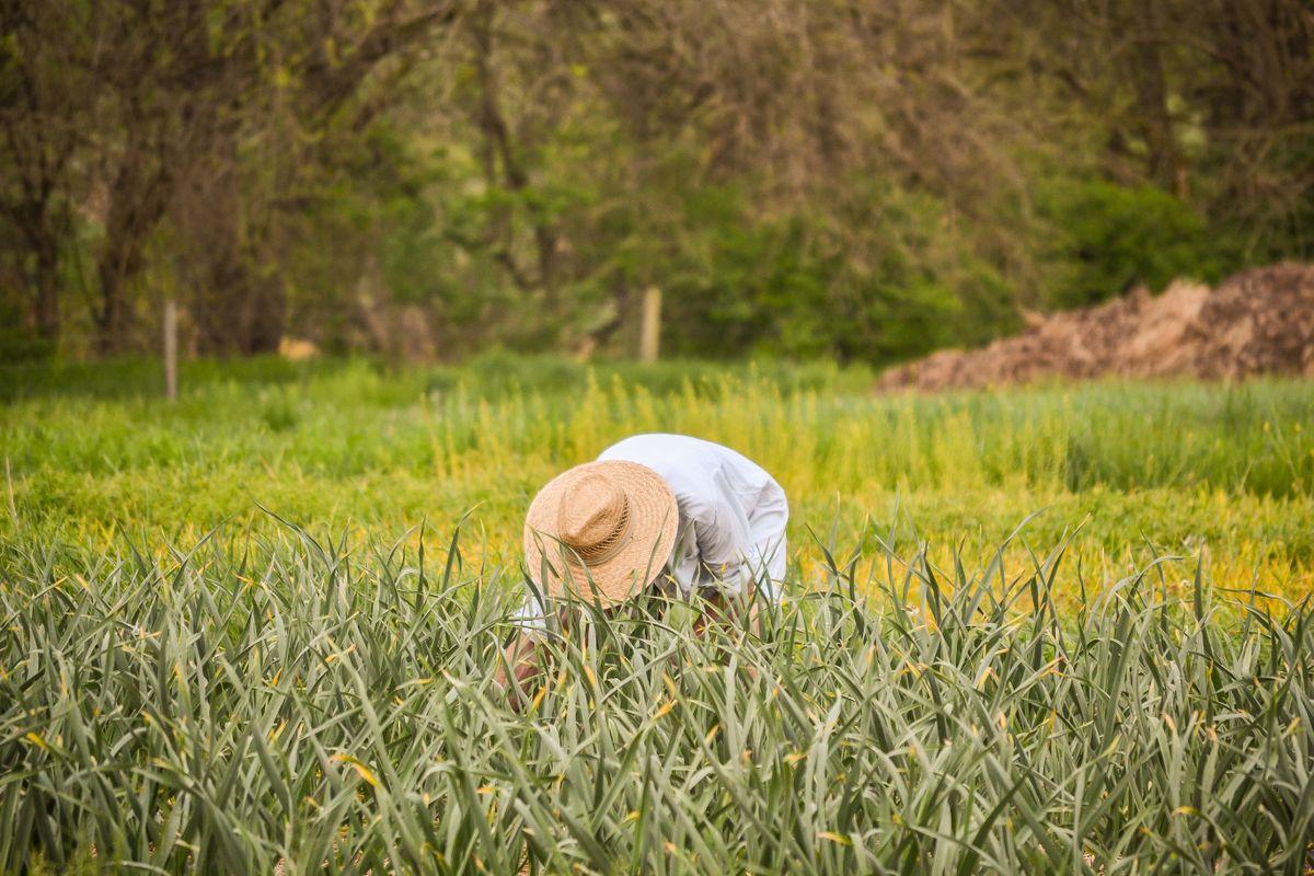 A farmer working in the fields