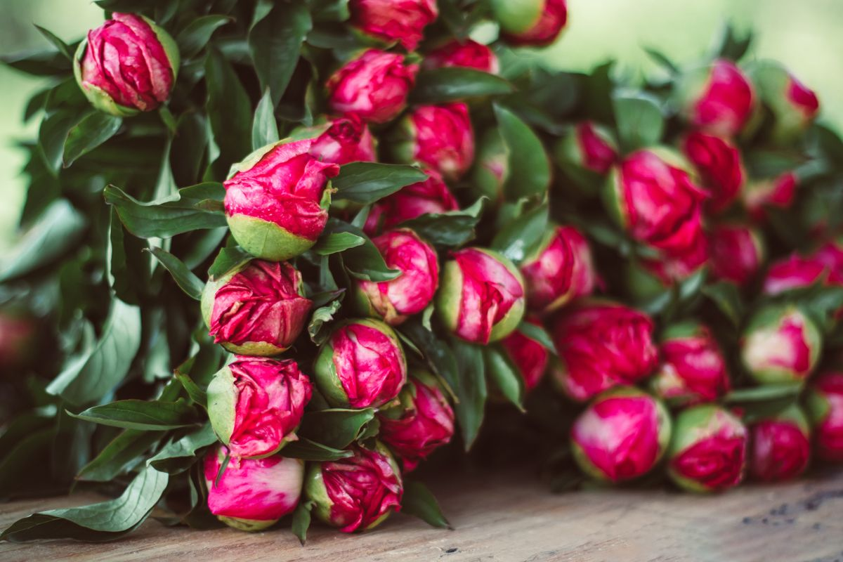 Bunched peonies on a table