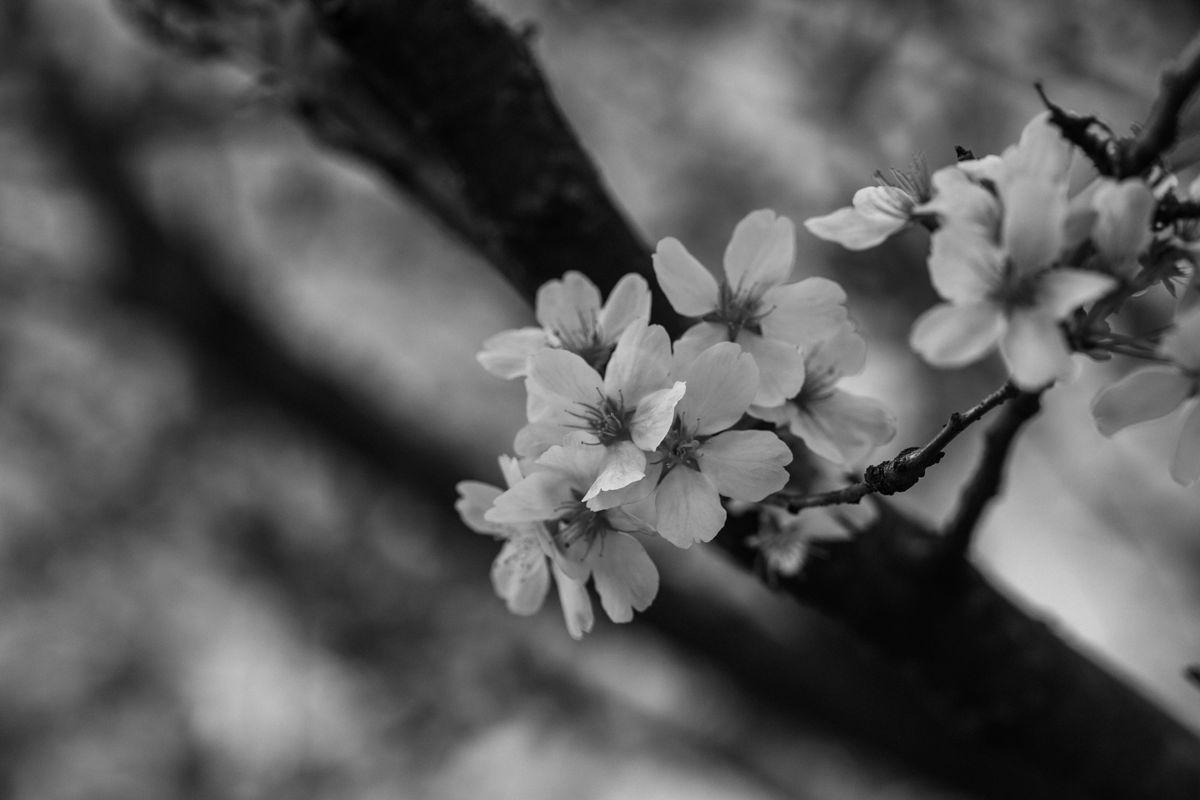 Spring in B&W