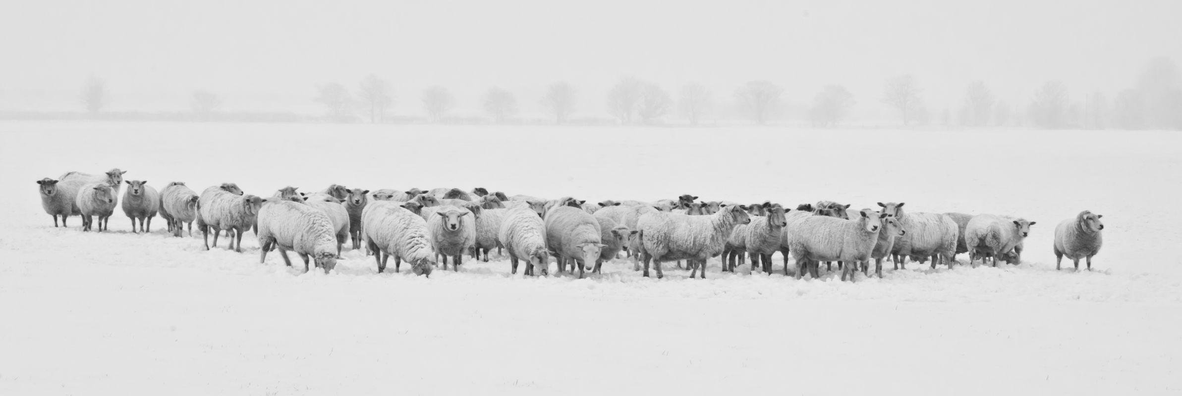 Winter-black-and-white