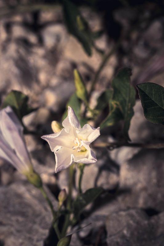 Color Flowers