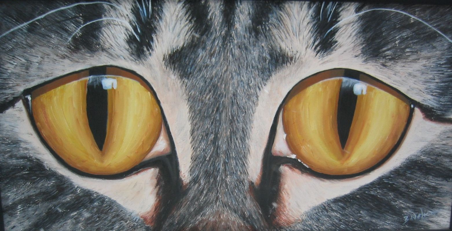 Eyes of the Tabby