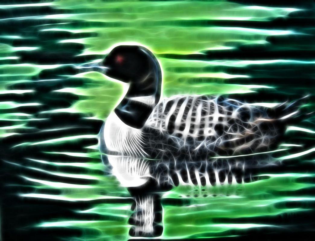 Fractal loon