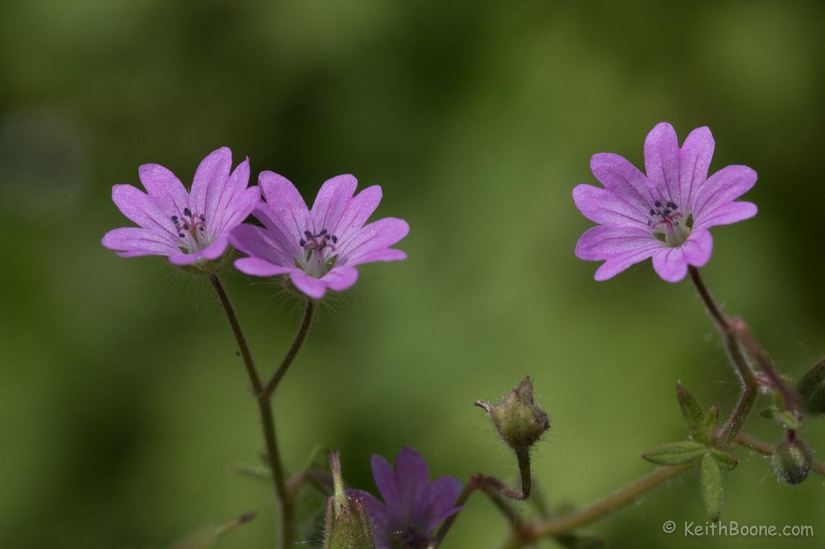 Purple Flowers Macro