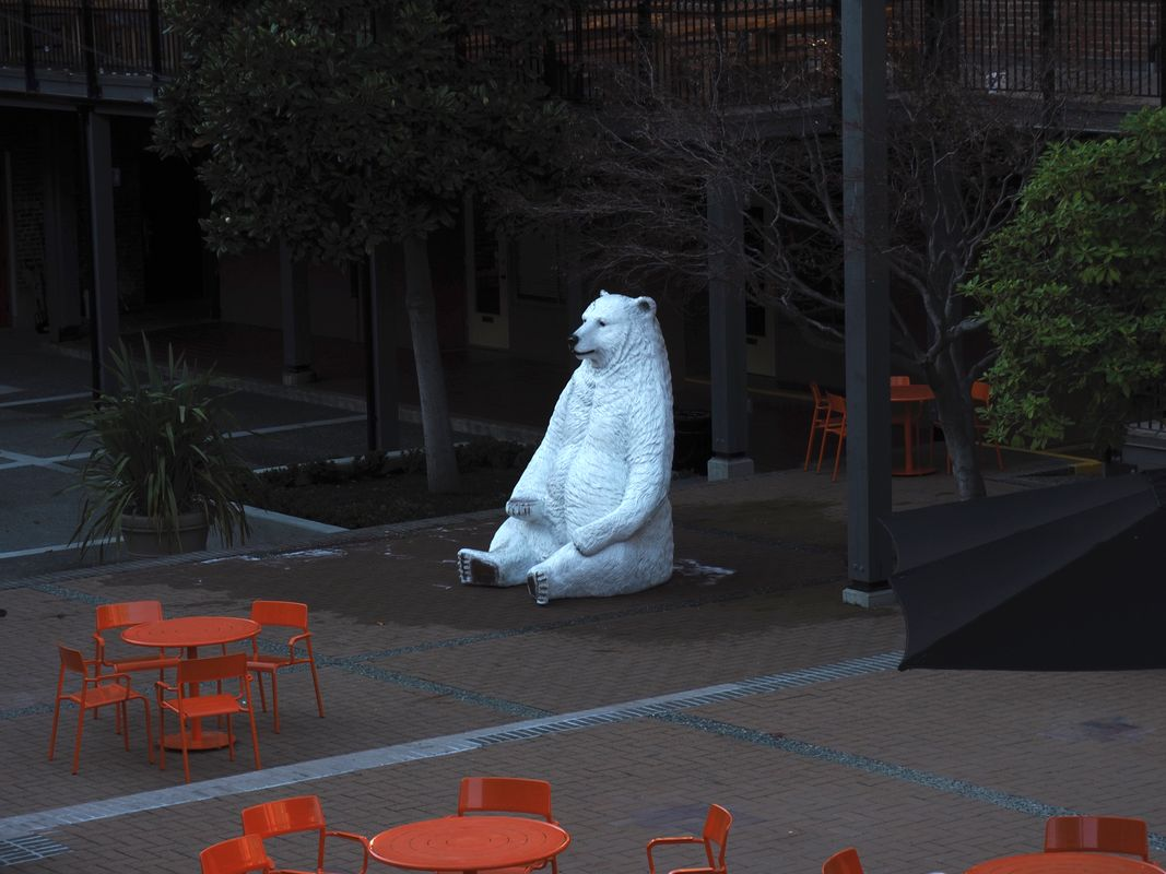 The Polar Bear in the Square