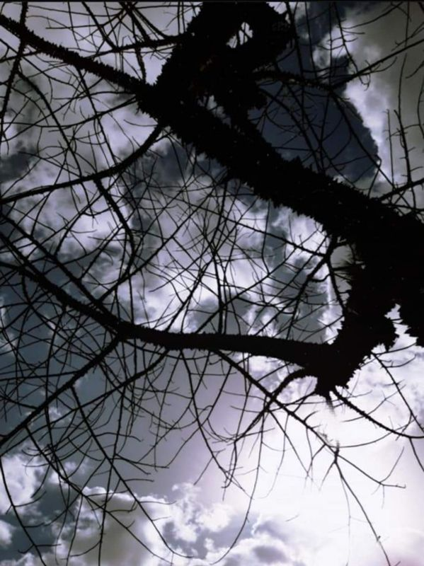 Beautiful view of tree branches with the sky