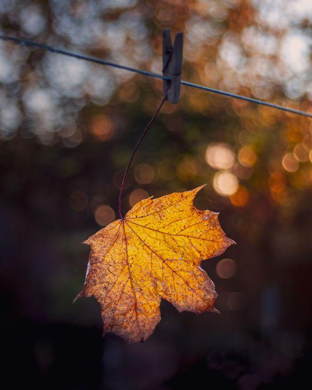 Leaf on the washing line