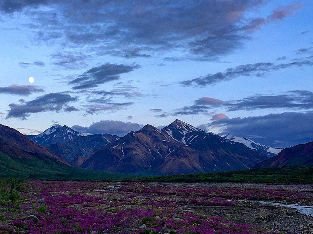 Alaskan Purple Flower Bed
