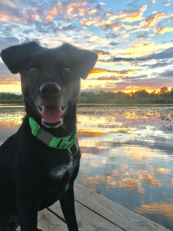 Happy Pup Sunset