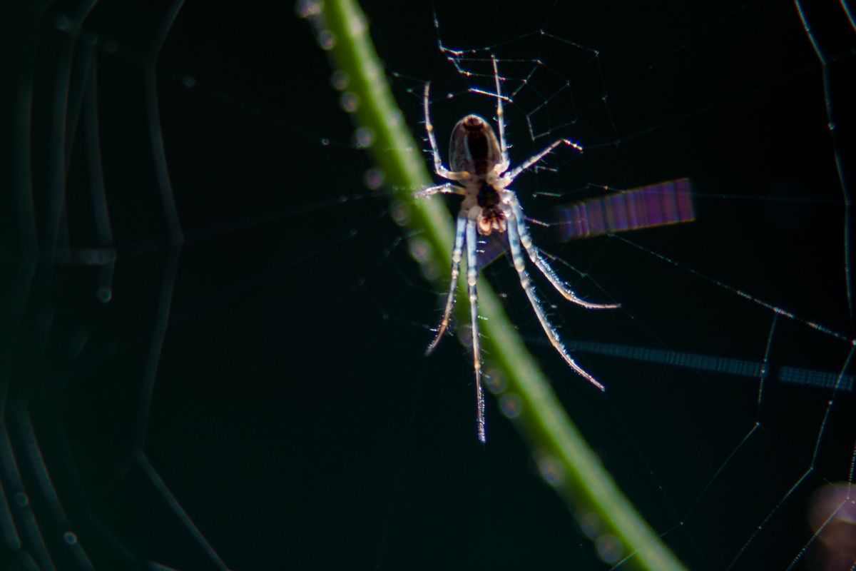 Little Spider in its Web