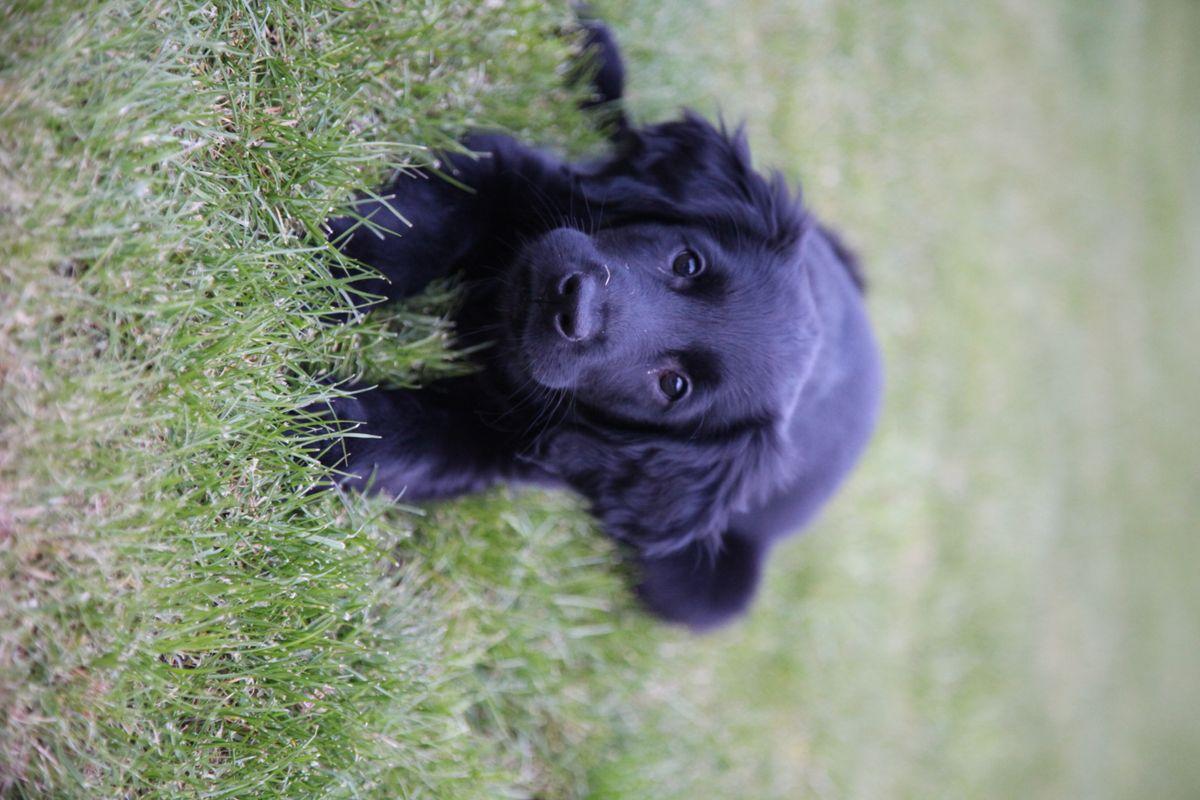 Mila looking