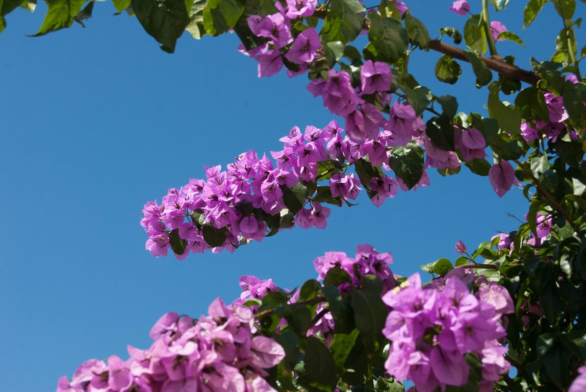 Some blossom