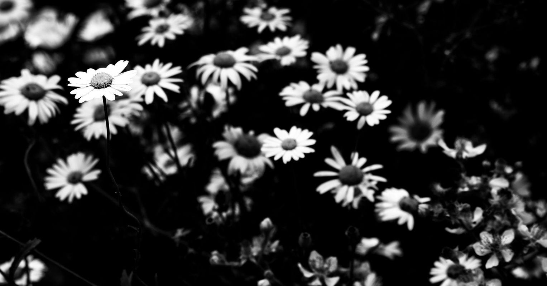 Bunch of flowers B&W