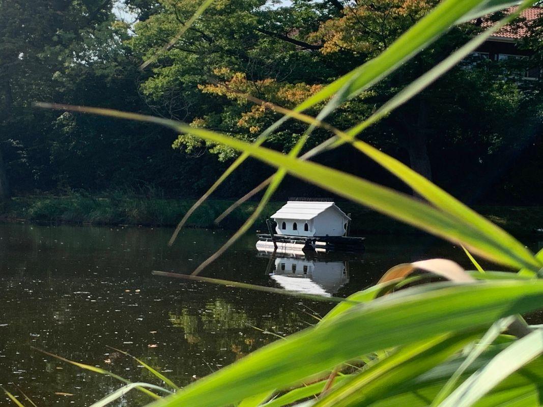Duck house on a lake in Vlissingen - Netherland