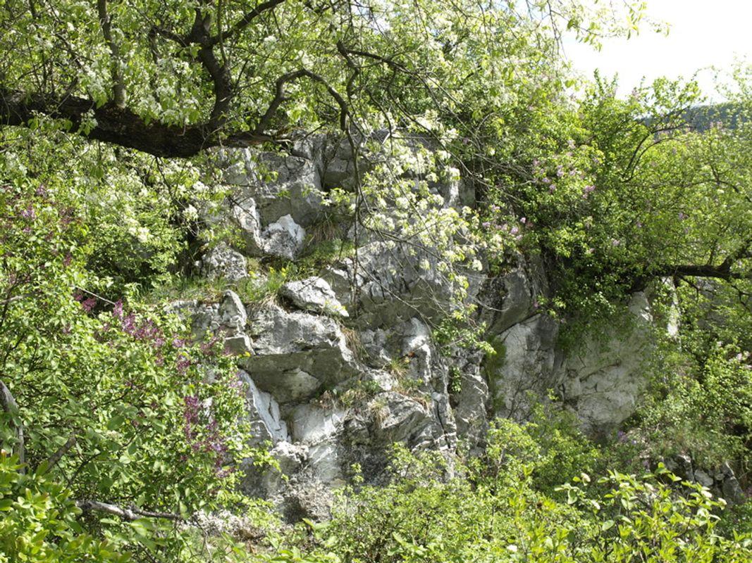 Near the Szeleta cave