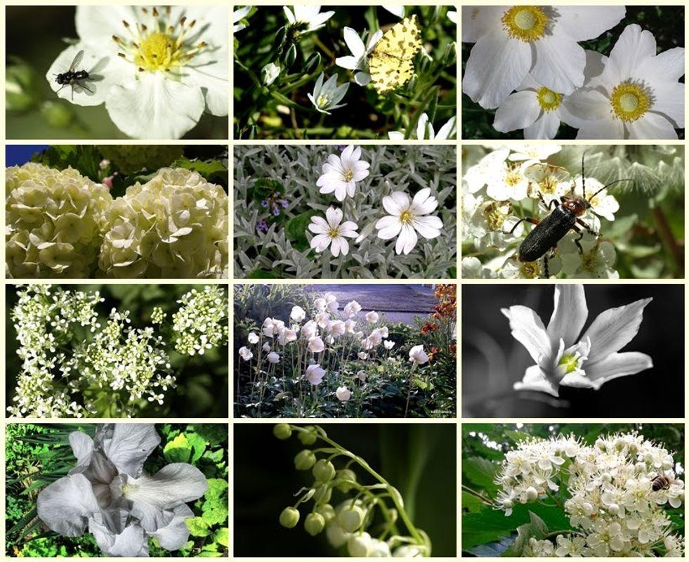 Flower mosaic #2