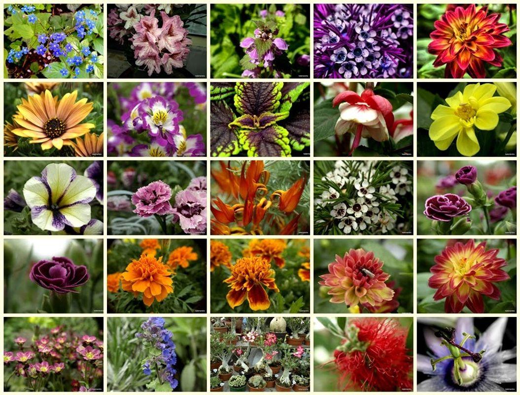 Flower mosaic #1