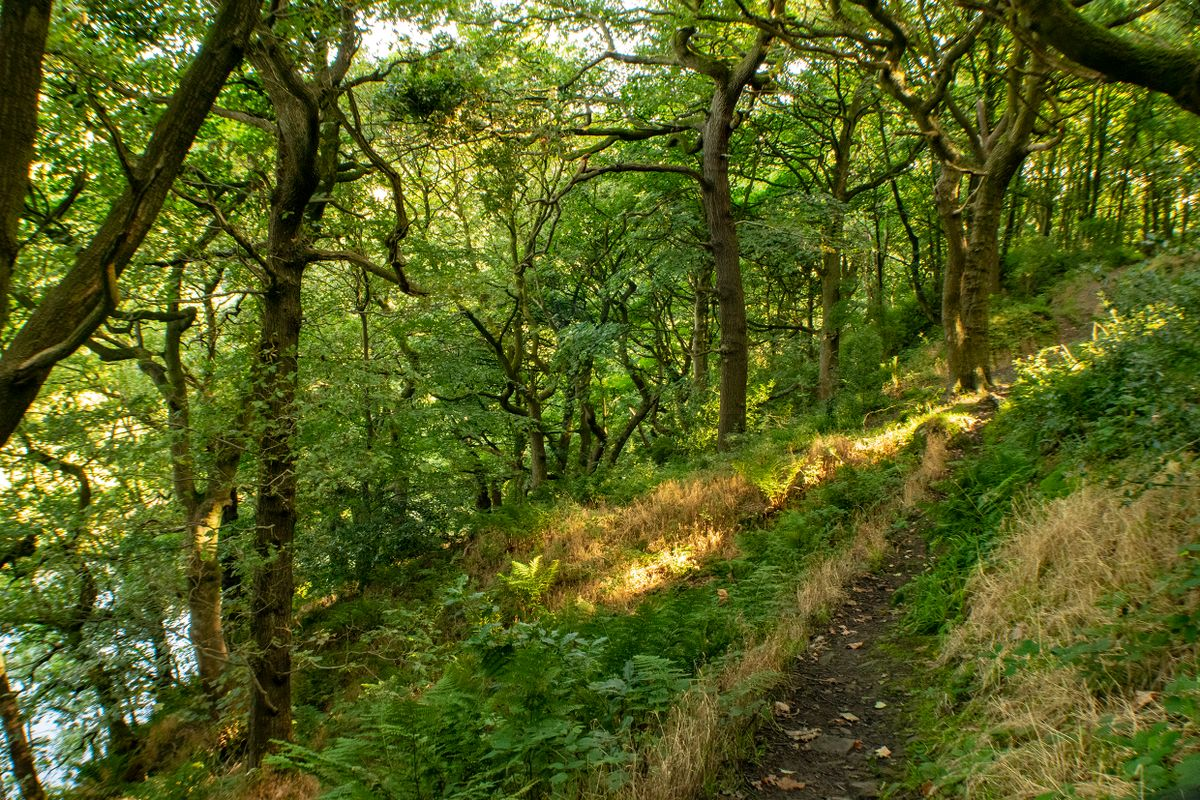 Woodland Path at Dixy Woods, Sowerby Bridge