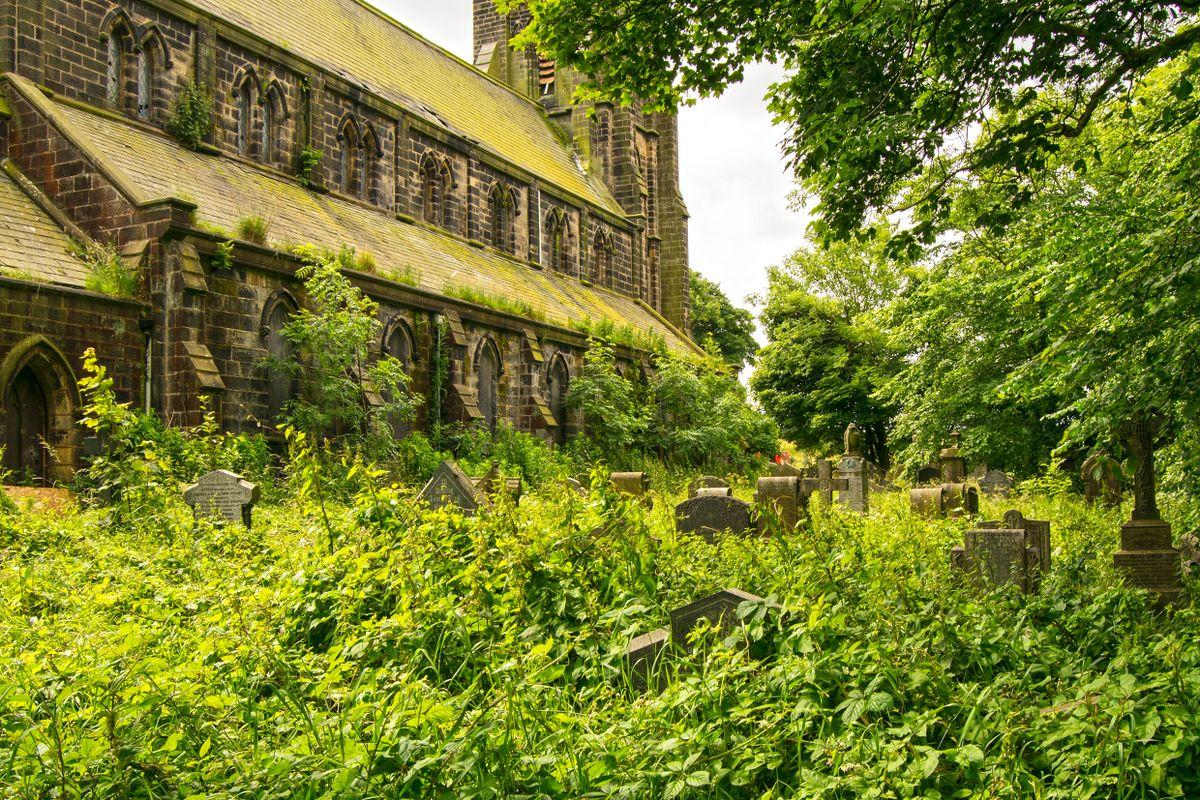 Overgrown at St Paul's, Denholme
