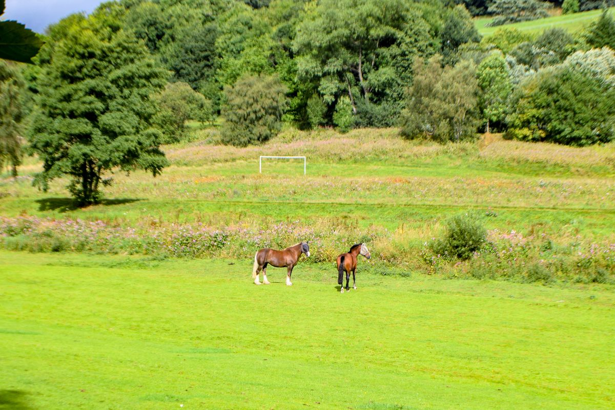 Horses at Brearley, West Yorkshire