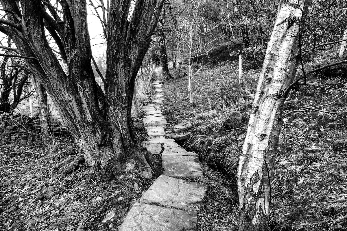 The Crooked Path.