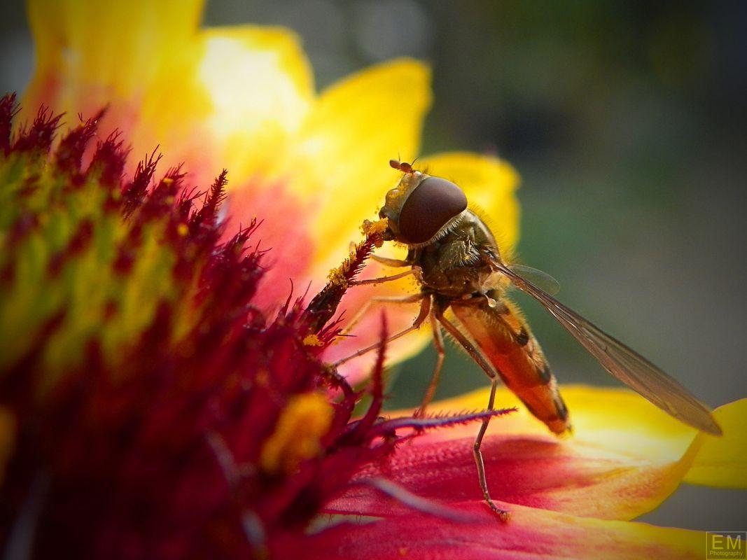 Hungry Bug