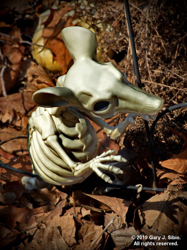 A Toy Rat Skeleton Used As a Garden Ornament (2019-04-16 13-30-05a)
