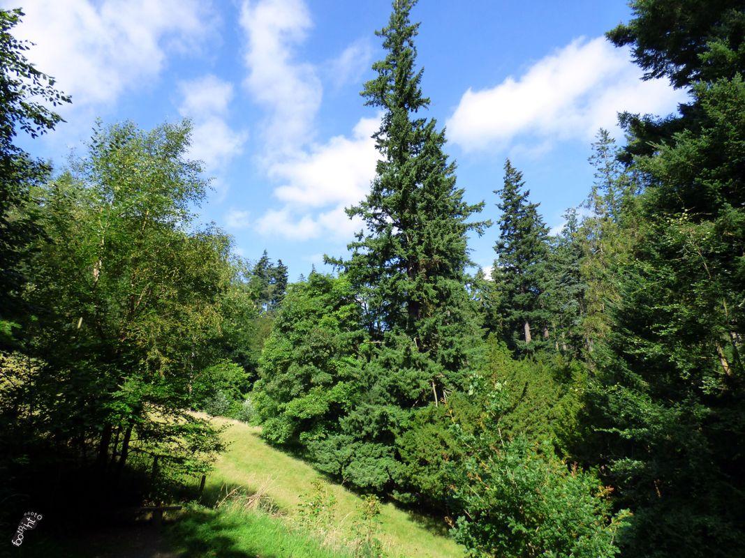 Cragside forest