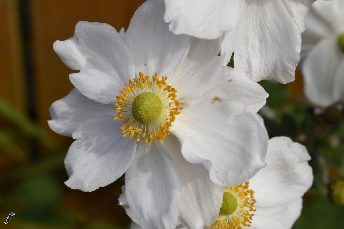 White flower in the back garden