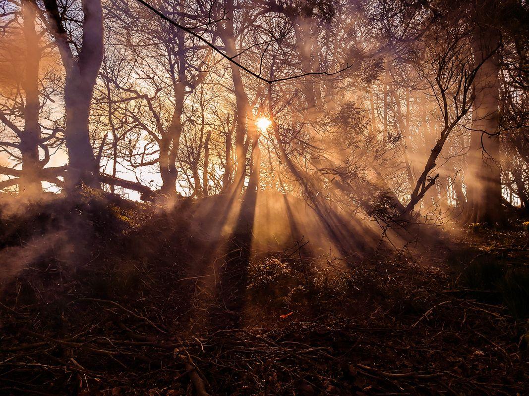 GOLDEN WOOD SMOKE IN DEVON FOREST