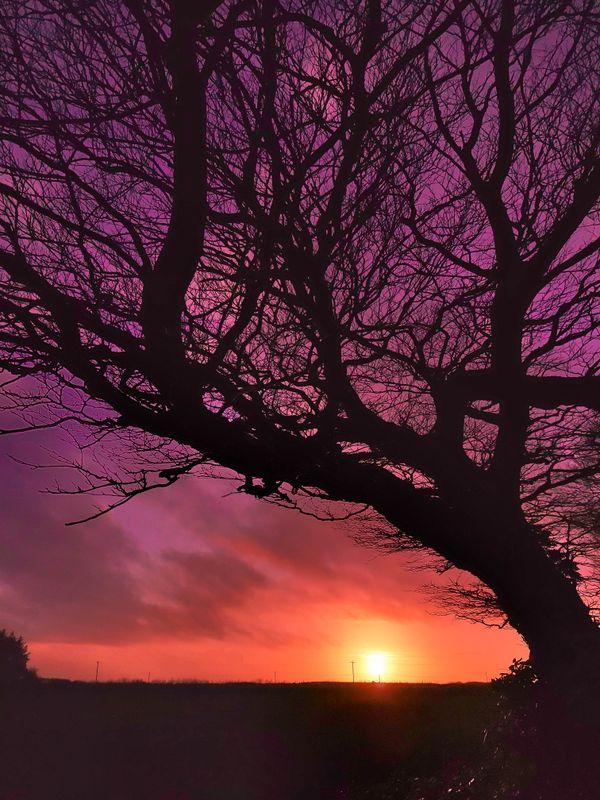 TREE SILHOUETTE FEBRUARY SUNSET DEVON
