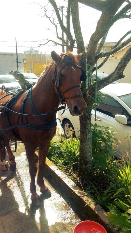 Horse taking a rest ~ Didi descansando