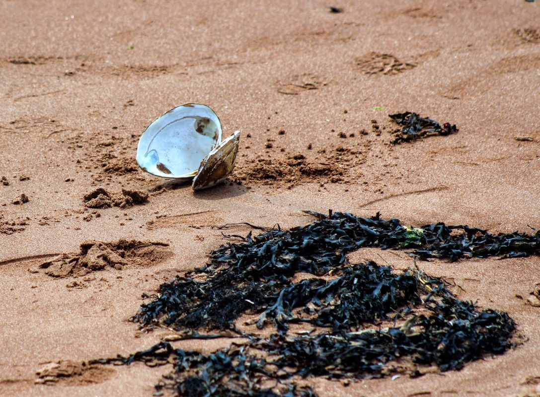 Treasures On The Beach