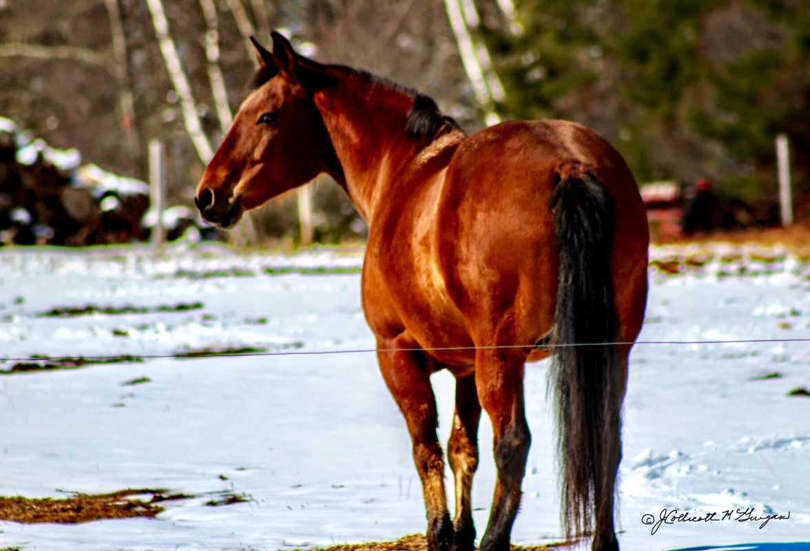 Horse Enjoying Sunny Day.