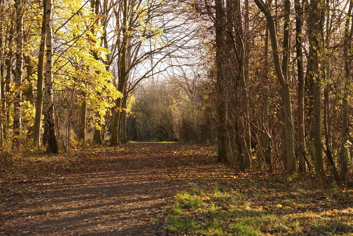 Shaded path green.