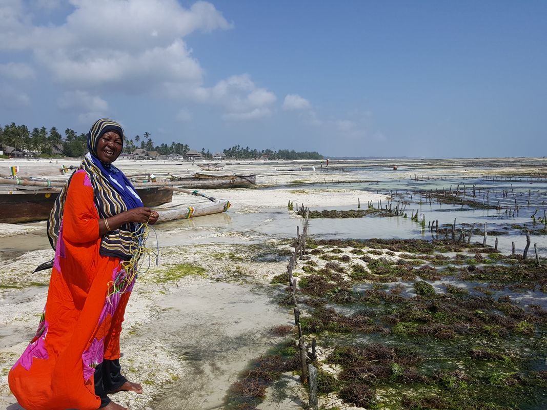 Lady and her seaweed farm