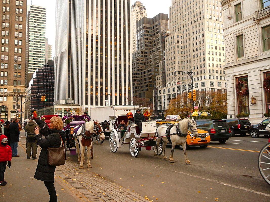 Horse carriage near hotel Plaza NYC