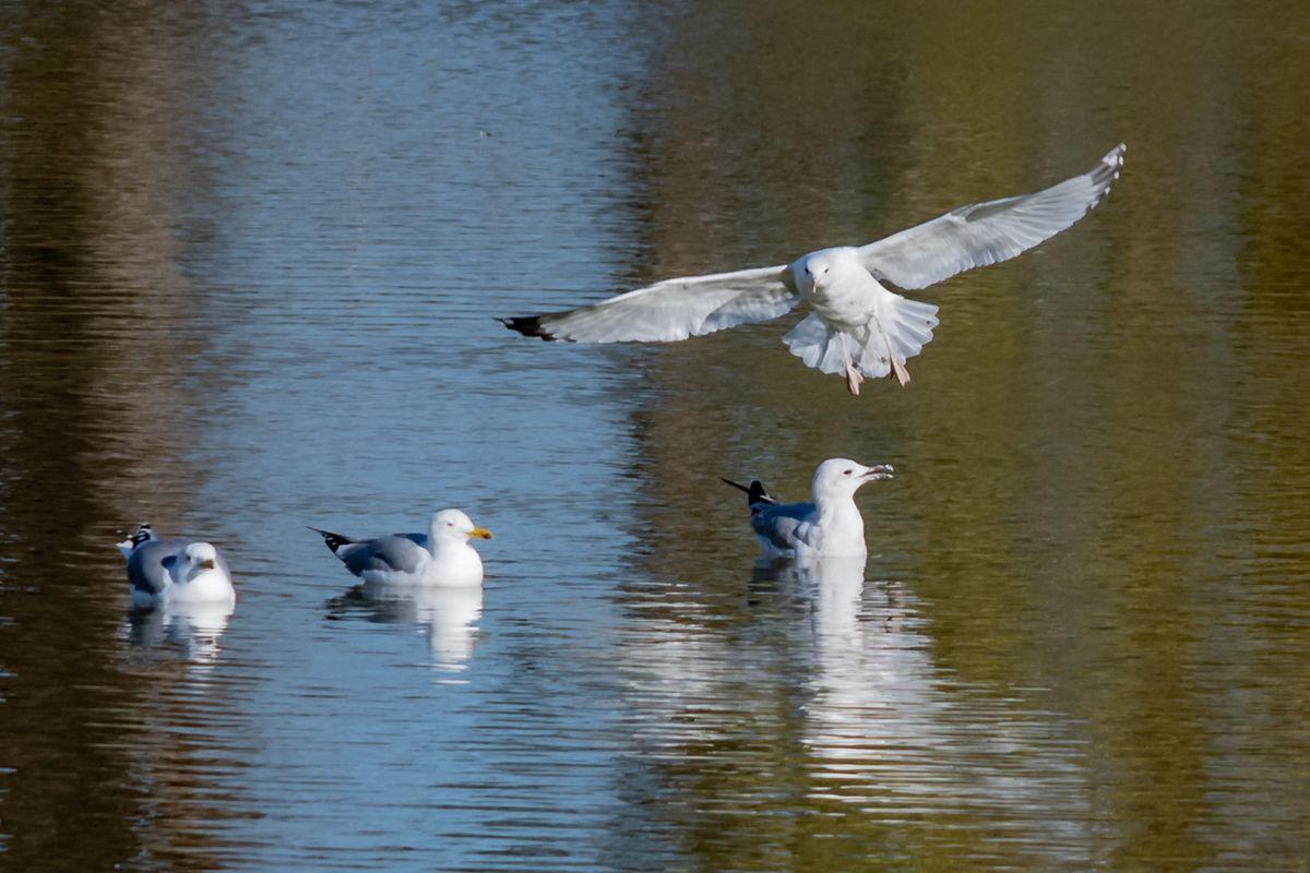 My friends, seagulls