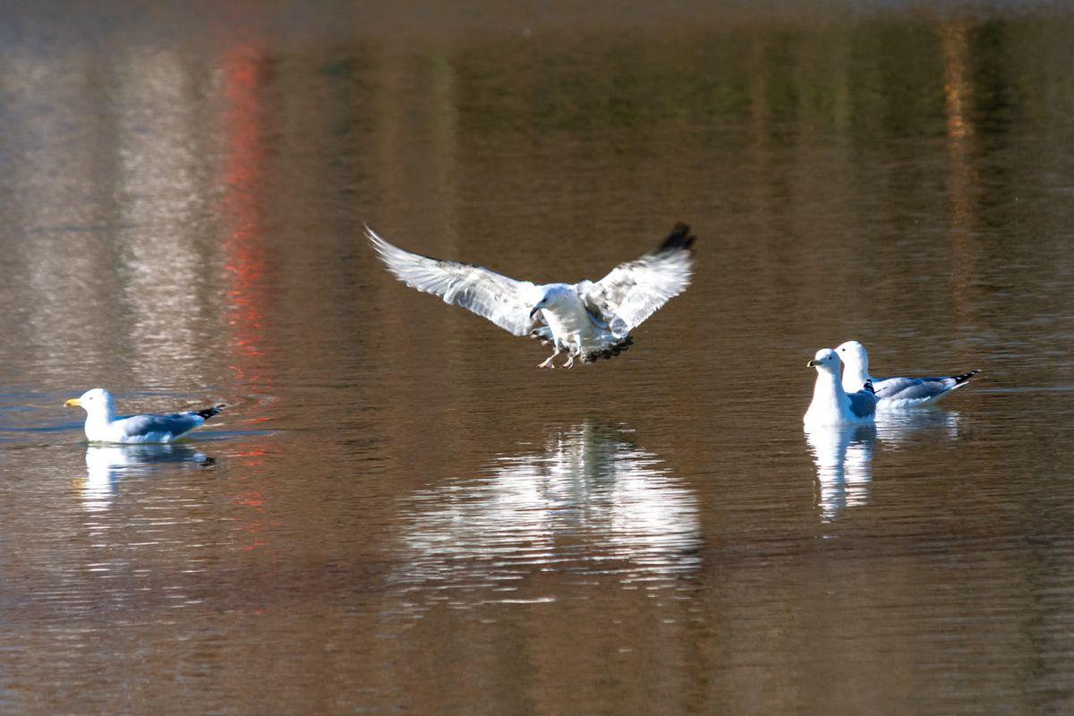 Landing on the lake