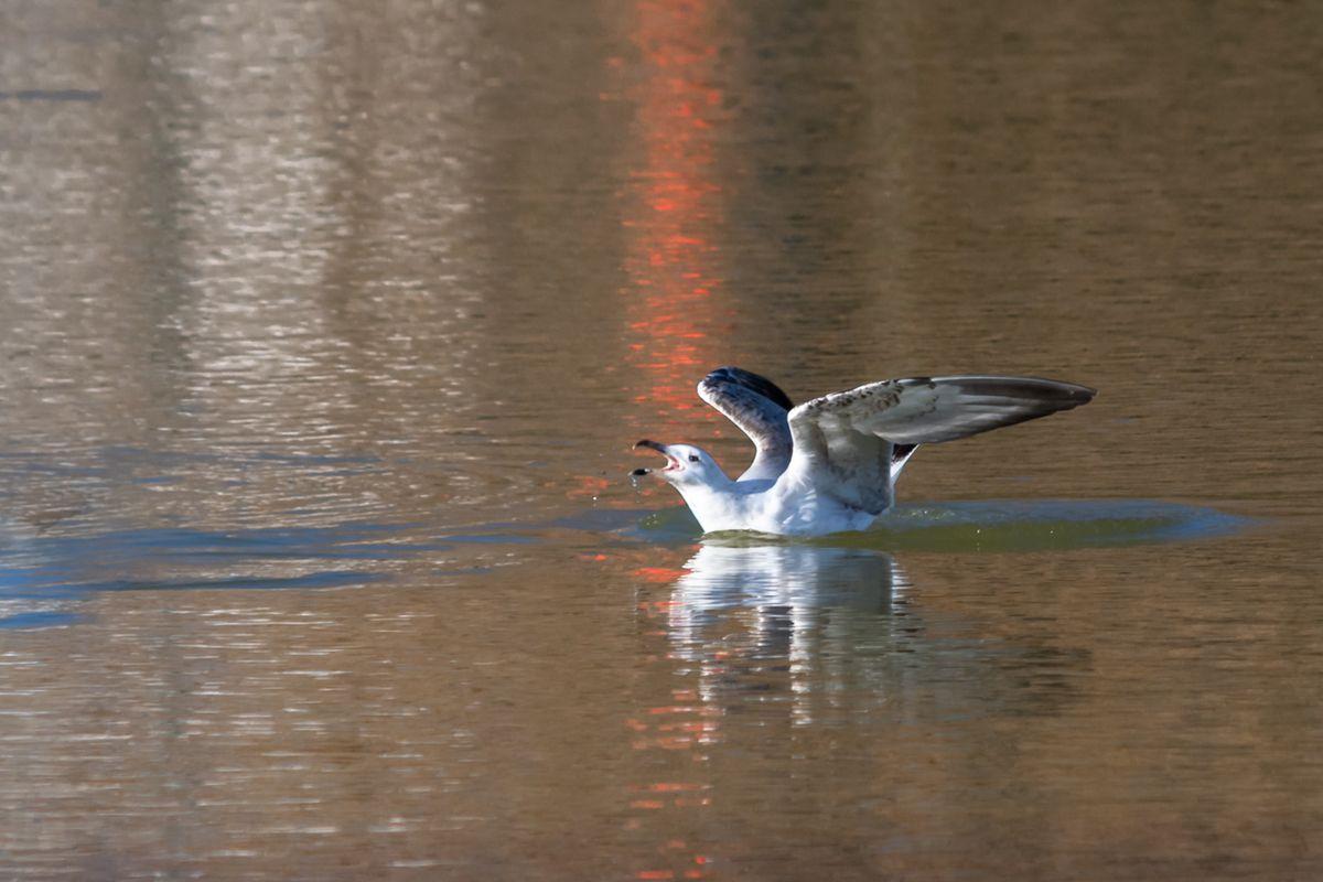 Singer on the lake