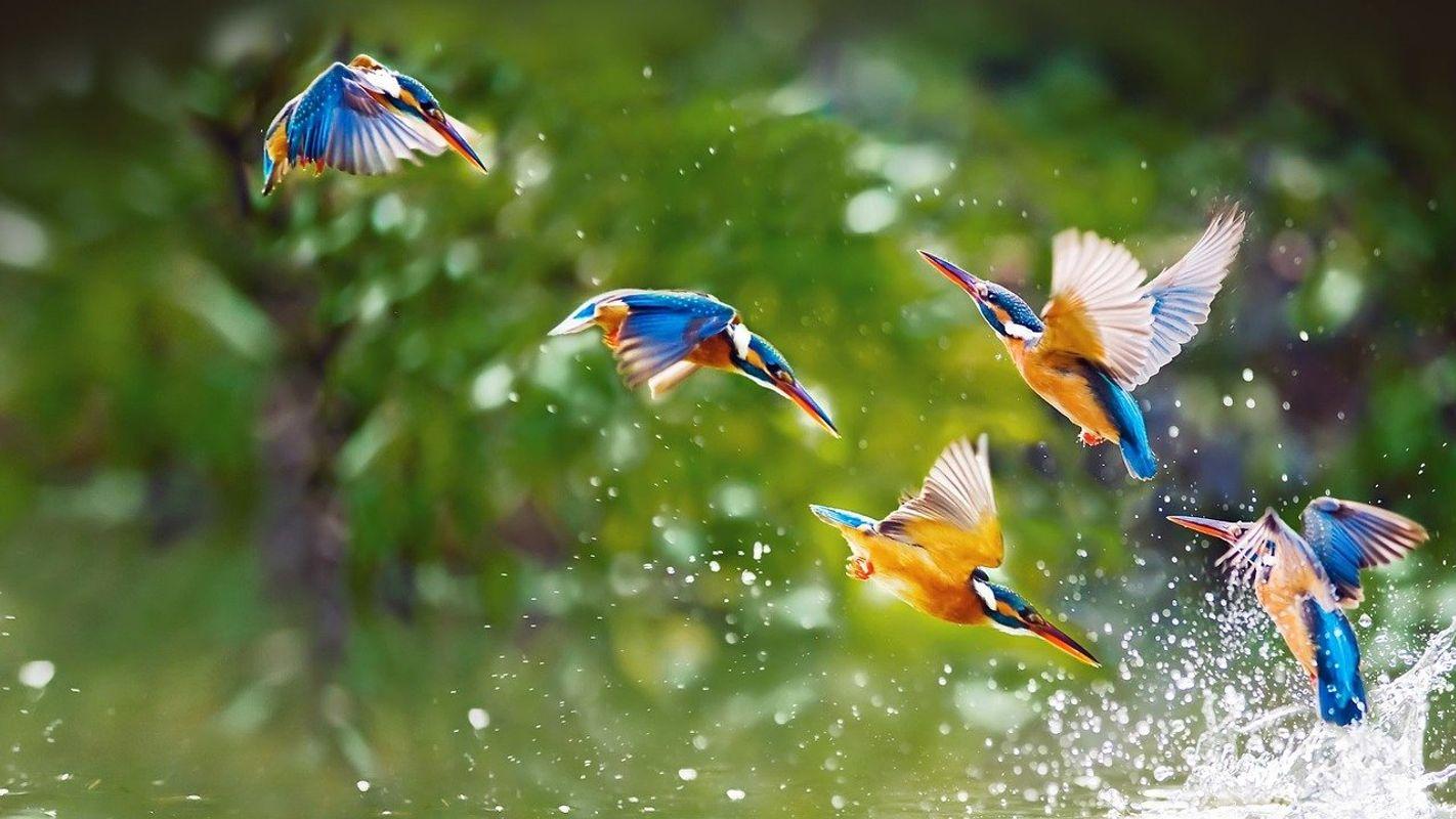 Birds-Hummingbird
