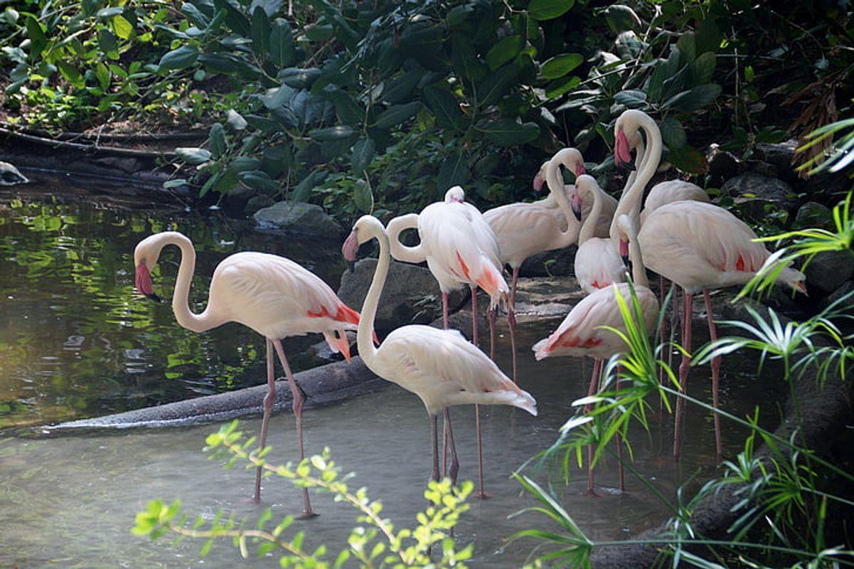 Flamingo-water-bird-feather-beak