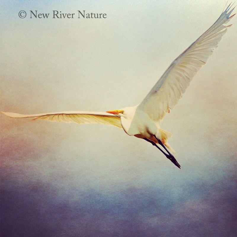 Egret flight copy