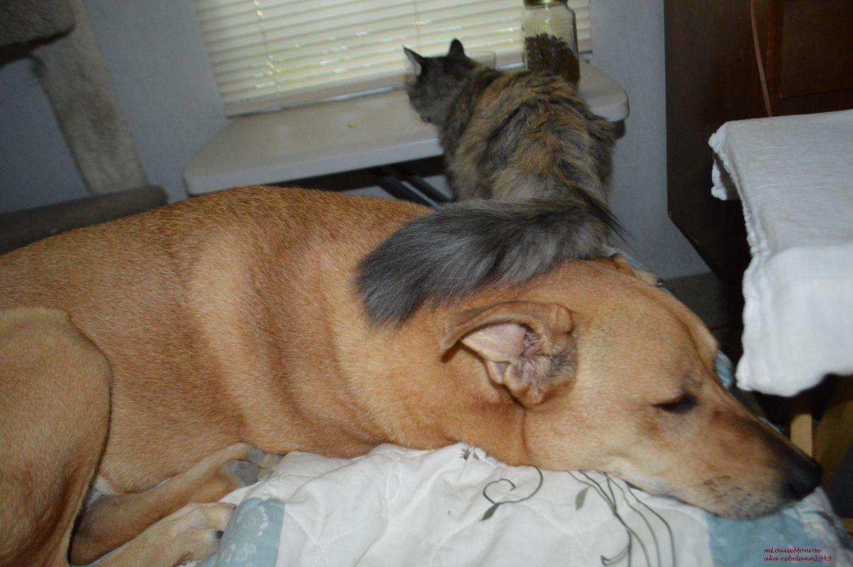 Boobear pets Ally