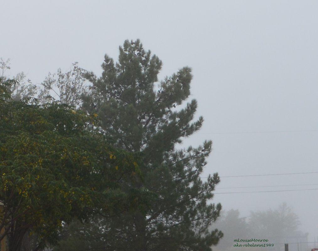 Fog in the desert