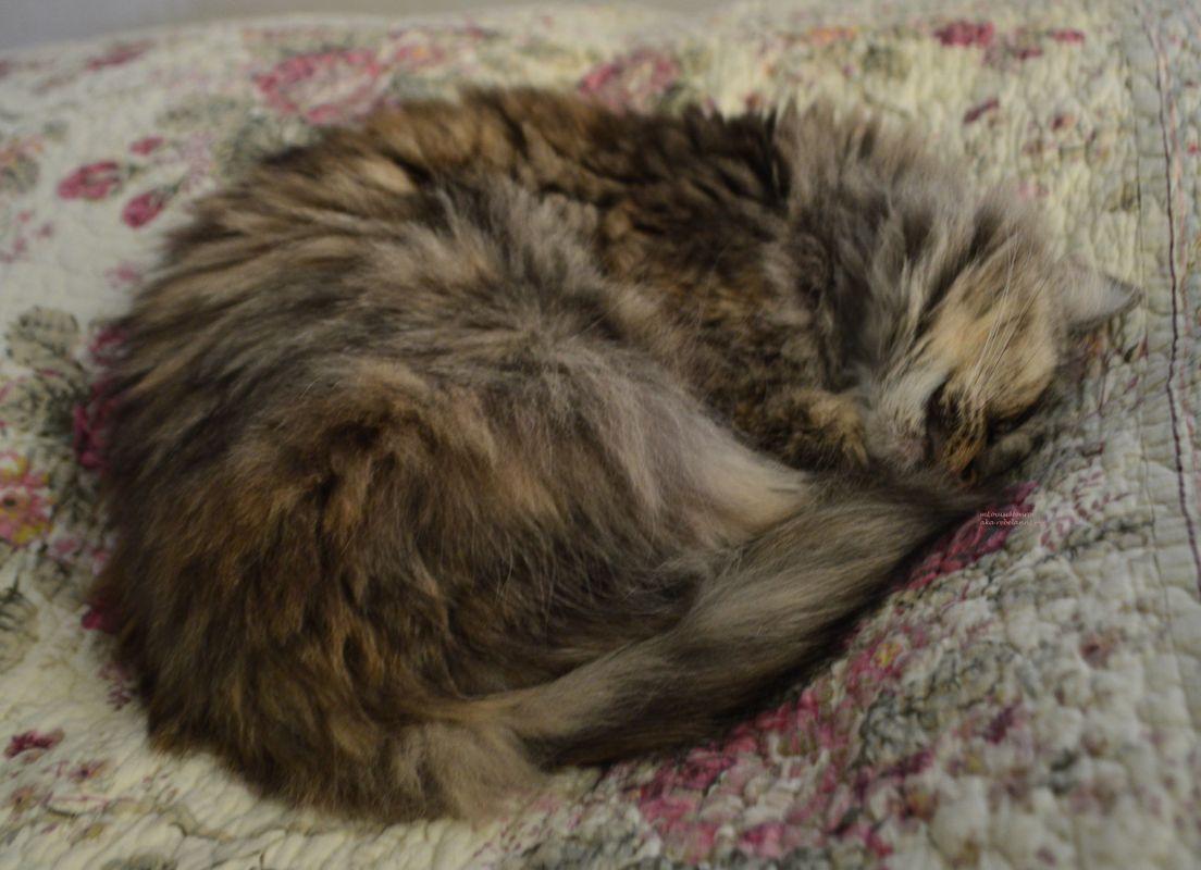 Boobear all curled up