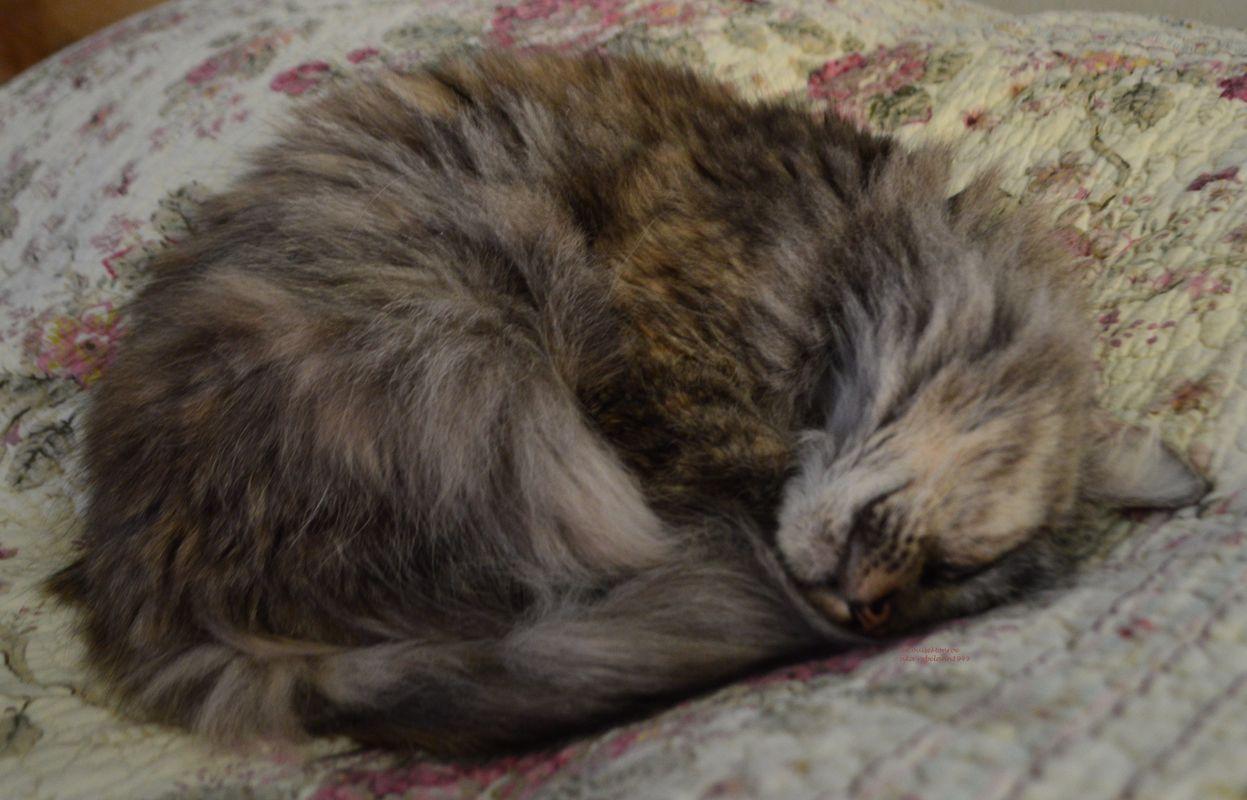 Boobear keeps warm curled up