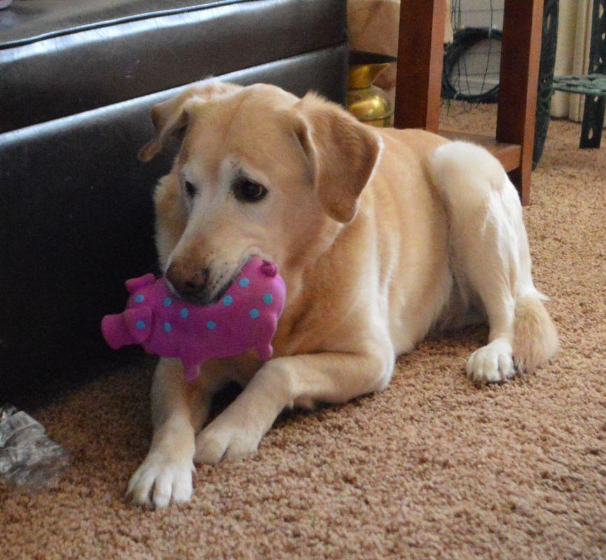 Cody & his new toy