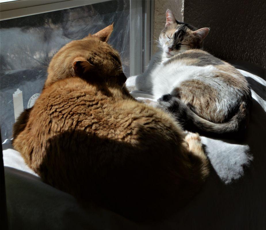 Max & Meetzee enjoying the sunshine
